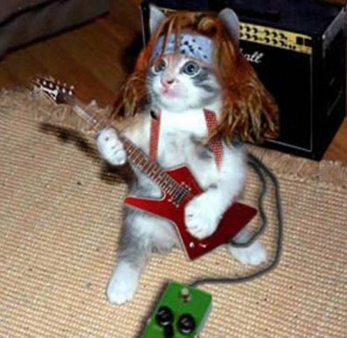imagenes-divertidas-gato-rockero